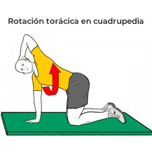 rotacion toracica